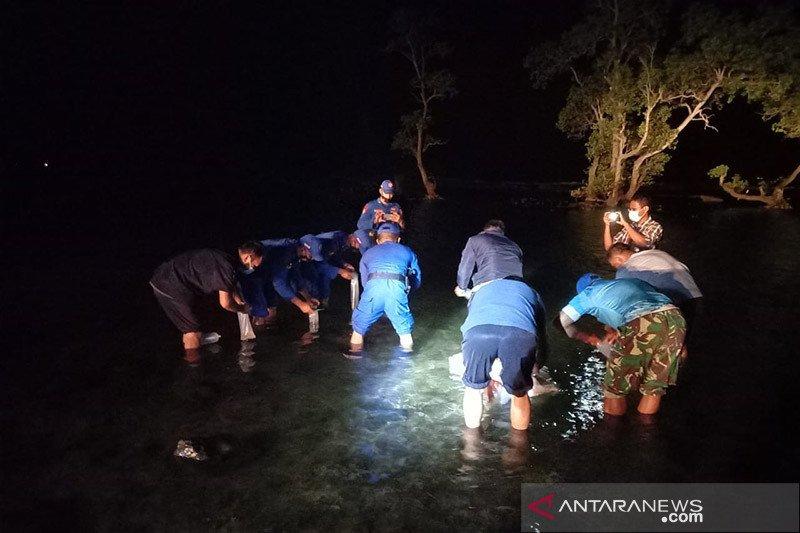 KKP lepasliarkan ribuan benih lobster hasil sitaan di Pandeglang