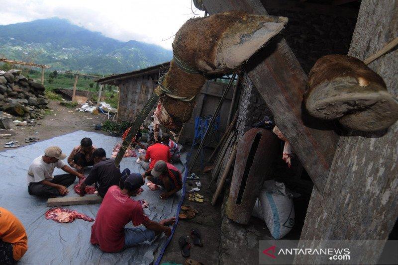 Tradisi potong daging sapi di kaki Gunung Merapi
