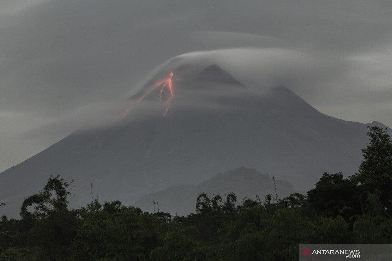 BTNGM : Pemulihan hutan terdampak erupsi Merapi butuh puluhan tahun