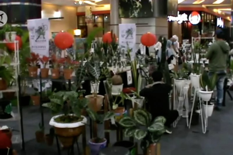 Pameran tanaman hias dukung kebutuhan warga Makassar