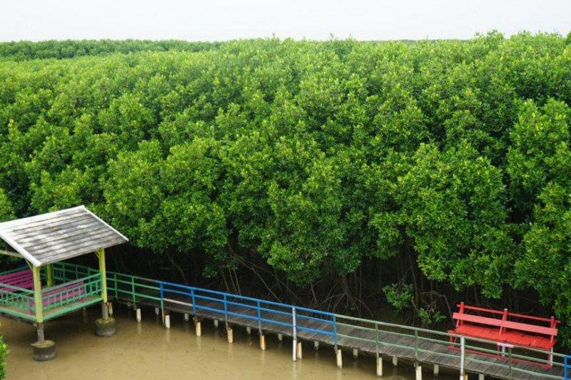 Kemenko Marves Kembangkan Mangrove Center of Excellence di Brebes