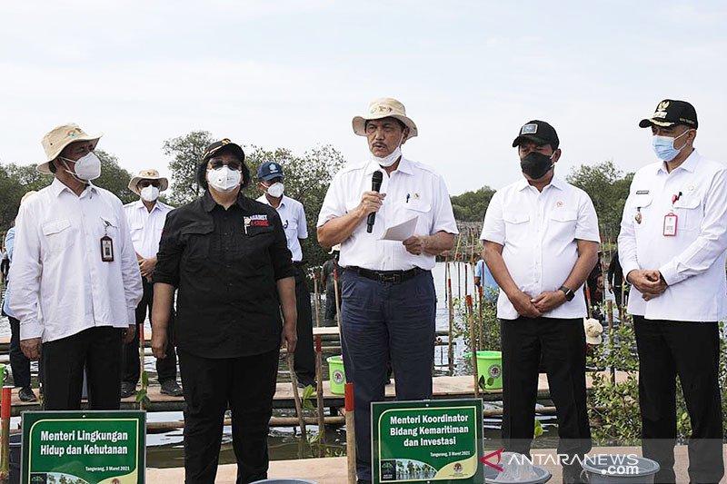 Luhut resmikan program rehabilitasi mangrove nasional