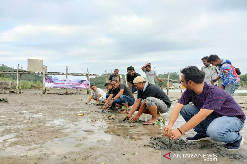 Cegah abrasi, senator bantu tanami mangrove di pesisir Pulau Aceh