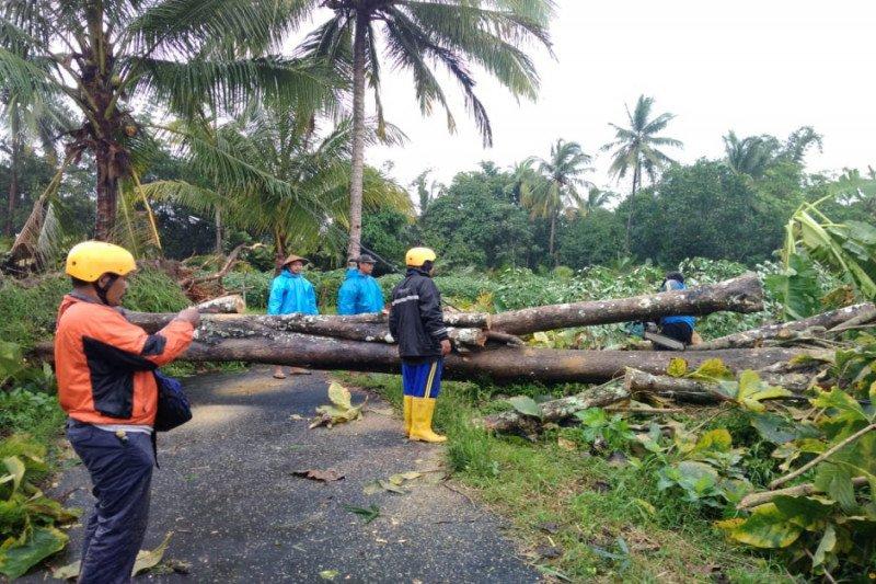 Angin kencang landa Sleman akibatkan puluhan pohon tumbang dan rumah