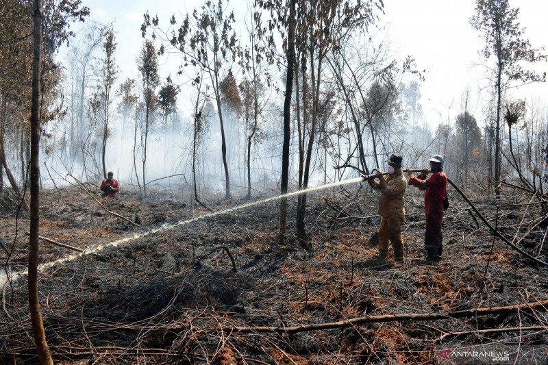 BBKSDA Riau butuh bantuan heli untuk padamkan kebakaran cagar biosfer