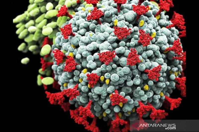 UGM minta masyarakat tak khawatir berlebihan dengan varian baru, B117