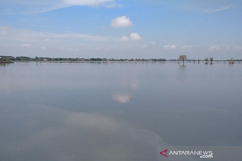 Puluhan hektare sawah di Kabupaten Kudus masih tergenang banjir
