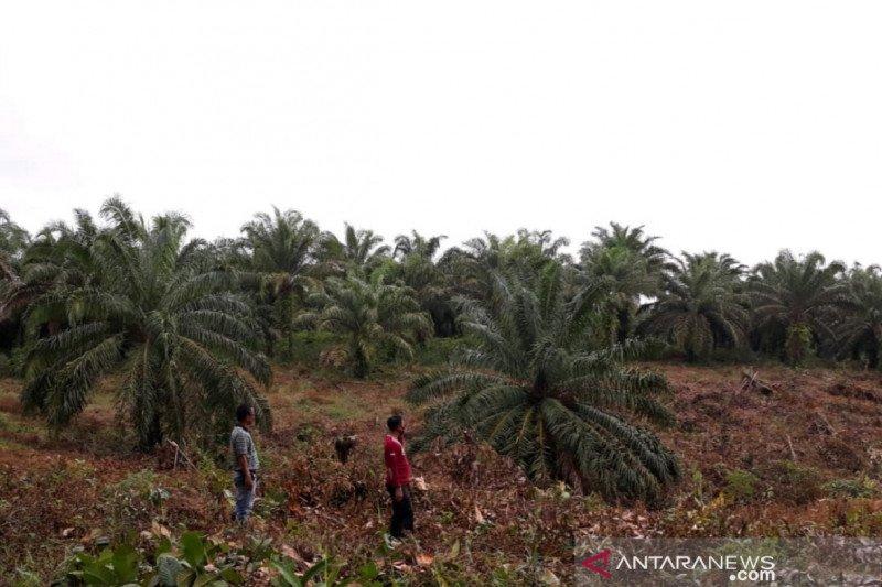 1.400 hektare lahan belum dicetak jadi sawah