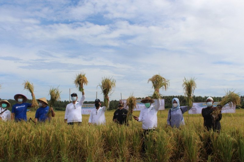Intani dorong Banten jadi produsen pangan nasional