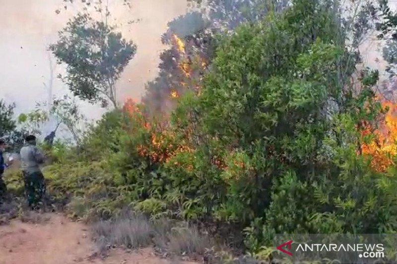 Enam hektare lahan di sekitar KKOP Bandara Hang Nadim terbakar