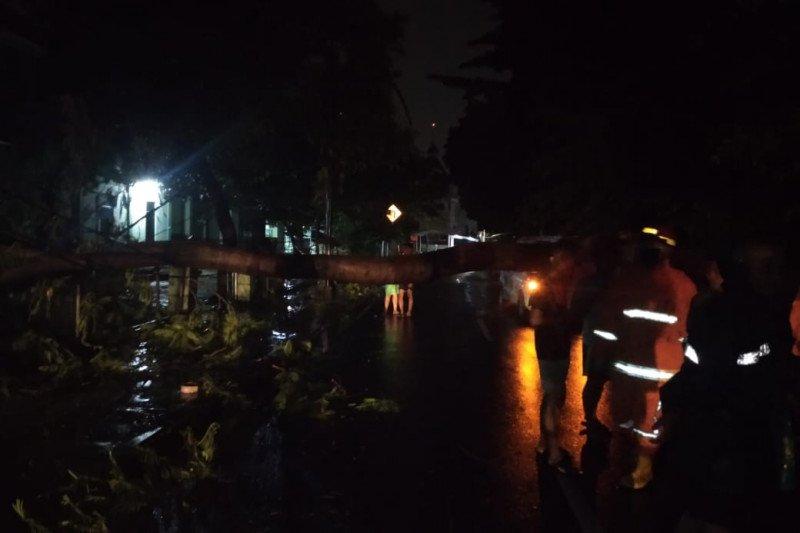 Damkar Jakarta Timur evakuasi pohon tumbang di Cijantung