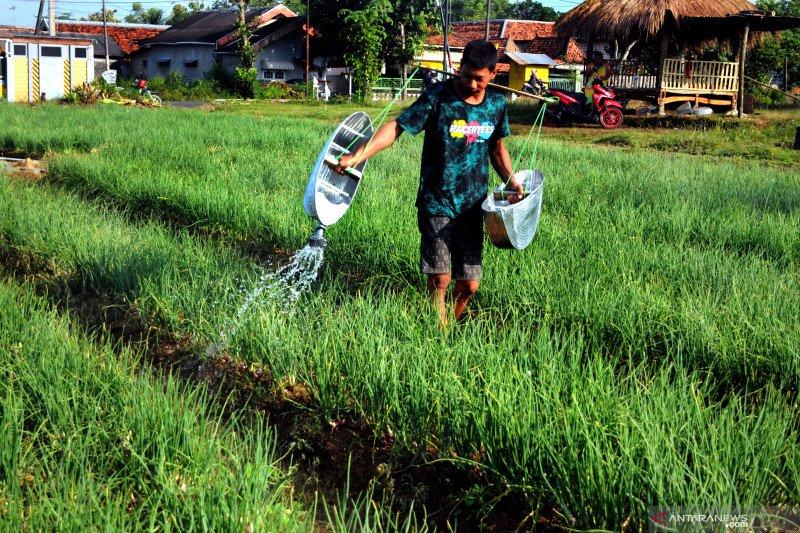 Dorong PEN, Bank Mandiri beri akses permodalan bagi petani