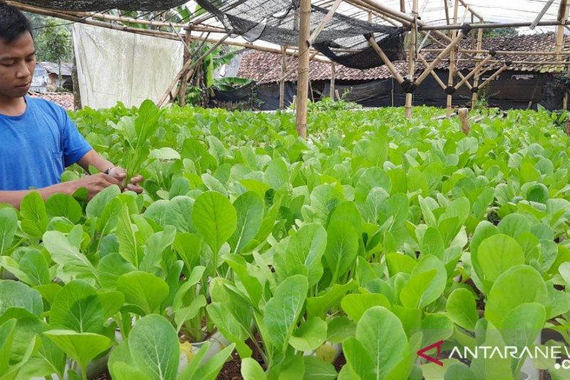 Jamkrindo fokus bangkitkan UMKM Sukabumi di tengah pandemi COVID-19