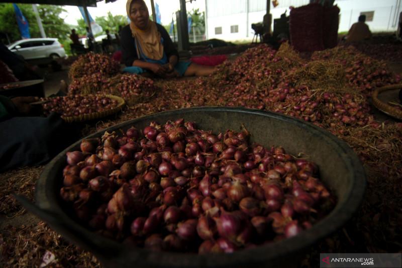 Harga bawang merah naik akibat stok berkurang