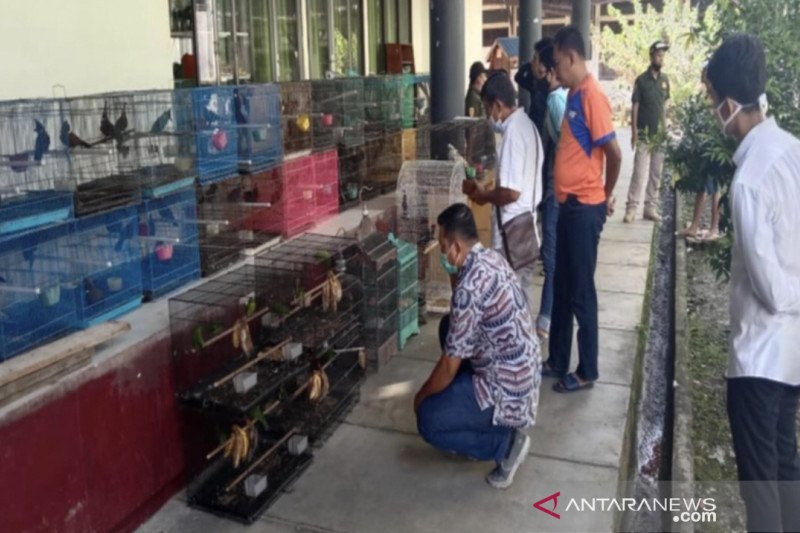 Balai Gakkum KLHK gerebek penampungan satwa dilindungi