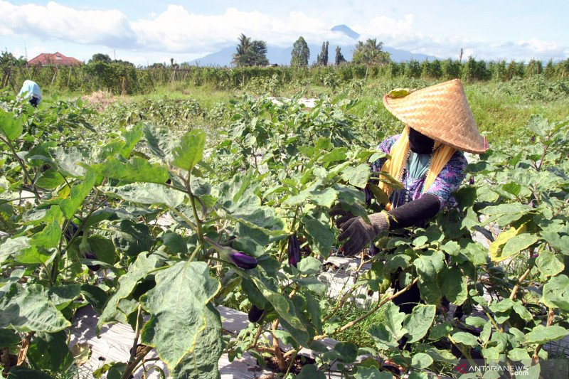 DPRD Bogor dorong pemulihan ekonomi lewat sektor pertanian