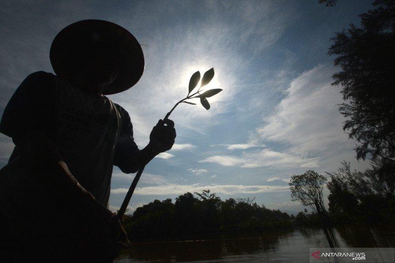 BRGM akan mereboisasi 6.000 hektare hutan bakau di Kalimantan Barat