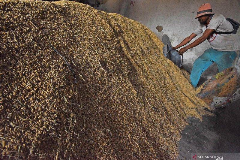 Ombudsman sebut  harga gabah turun bukan karena isu impor beras