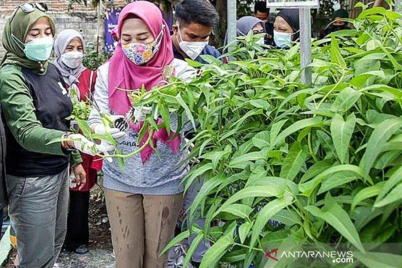PKK Jaksel panen sayuran hidroponik di Manggarai Selatan
