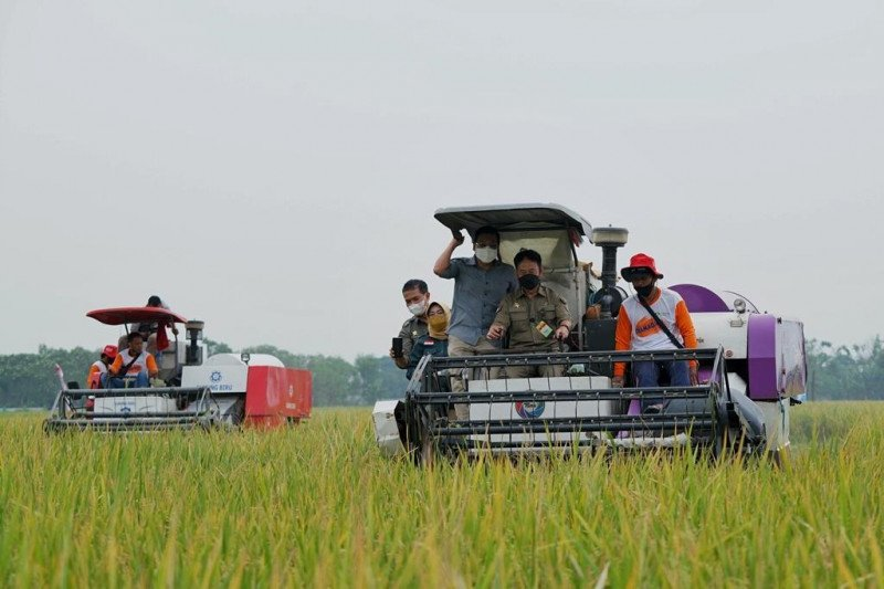 Pemerintah pastikan akan serap ribuan ton gabah petani Jombang