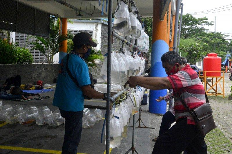 Sentra Ikan Bulak Surabaya disulap jadi pasar ikan hias