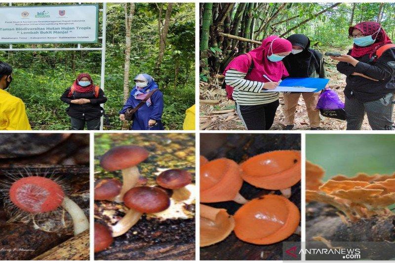 Taman Biodiversitas Hujan Tropis Kalsel miliki ragam jamur makroskopis