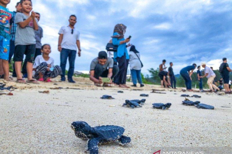 Lestarikan biota laut, 150 ekor tukik dilepasliarkan ke laut Aceh