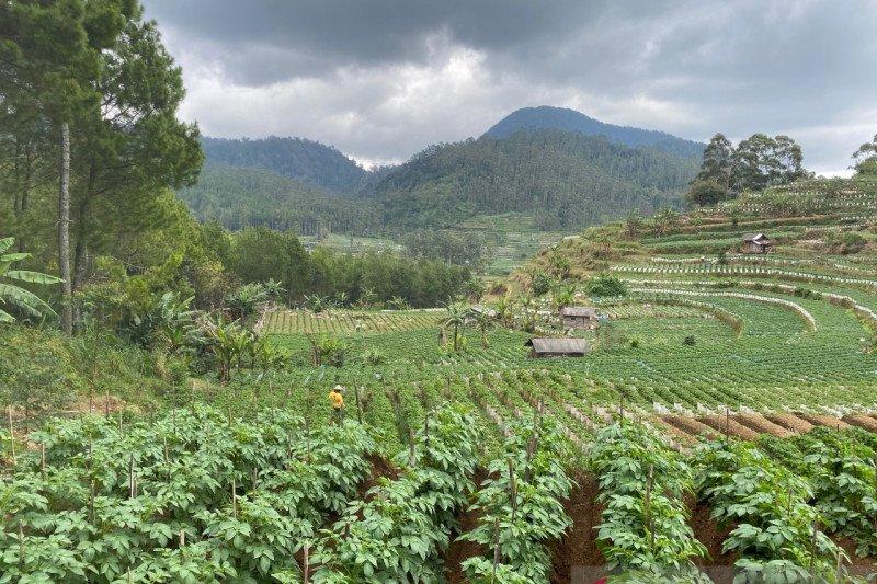Seruan restorasi hutan bagi kesehatan dan kesejahteraan