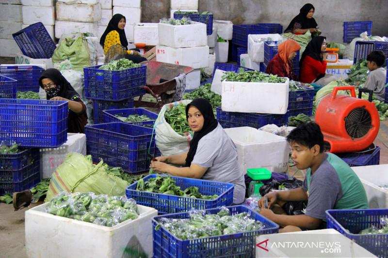 Ekspor sayur ke Malaysia melalui Dumai meningkat