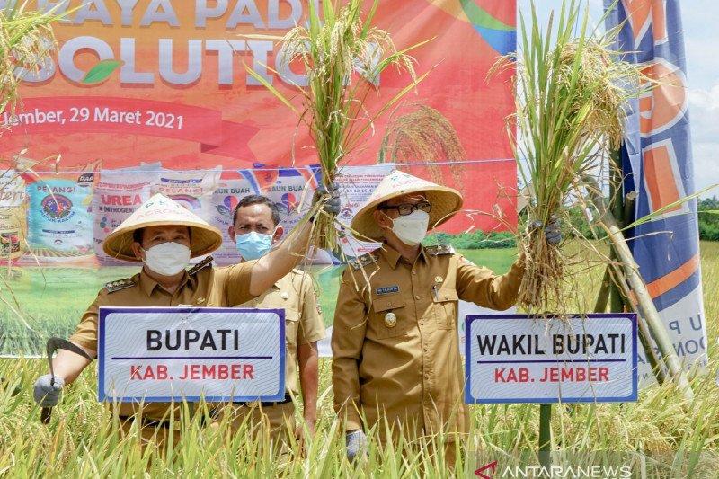 Bupati Hendy: Kabupaten Jember surplus beras 200 ton