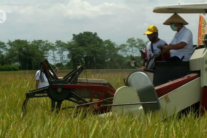Pemkab dan Pupuk Indonesia tingkatkan produktivitas padi petani Jember