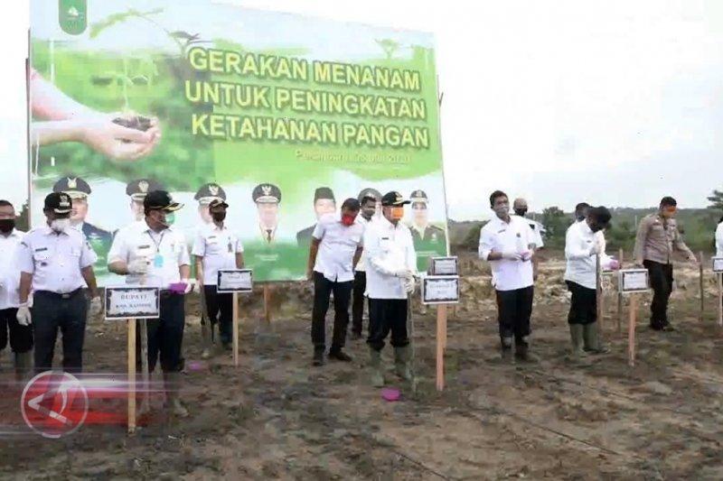 Riau siapkan 30.000 hektare lahan untuk food estate