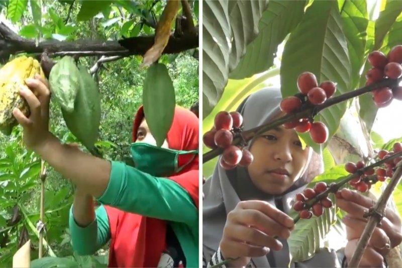 Pemkab Madiun dorong pengolahan produk kakao dan kopi