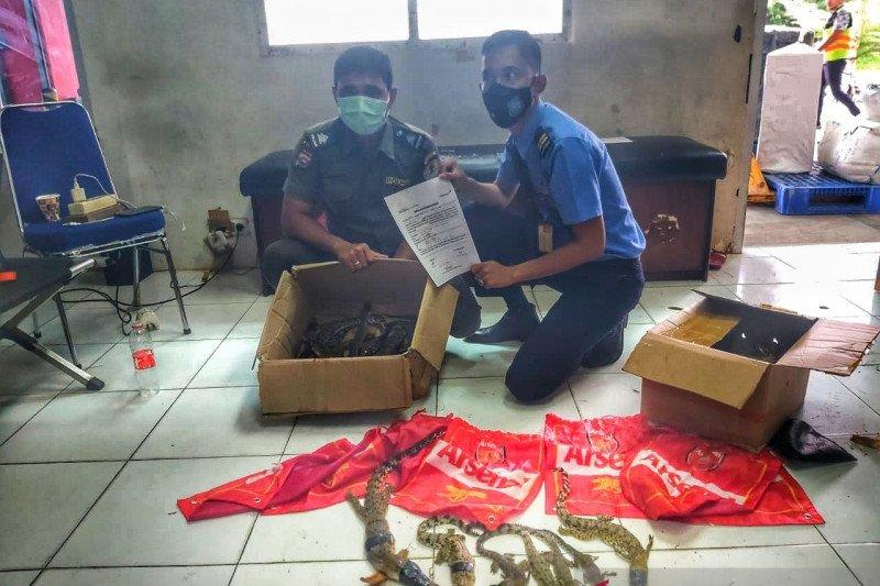 Bandara Pekanbaru gagalkan penyeludupan paket 22 anak buaya muara