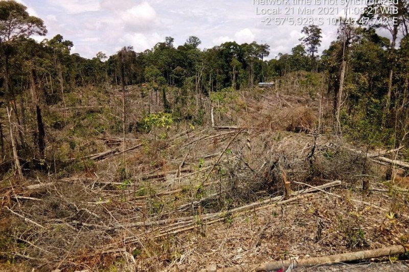 334,38 hektare hutan Mukomuko rusak akibat perambahan