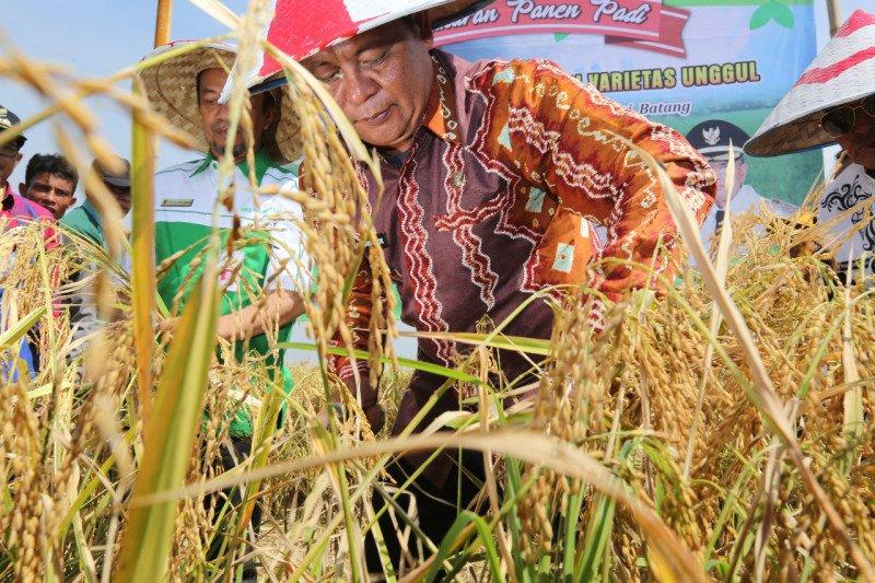 Surplus beras sejak 2016, Kalsel cetak sejarah ketahanan pangan