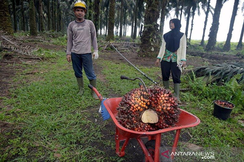 Industri sawit entaskan 1,3 juta masyarakat pedesaan dari kemiskinan