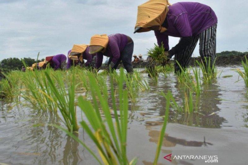 Pemkab Madiun anggarkan Rp2 miliar untuk subsidi pupuk petani kecil