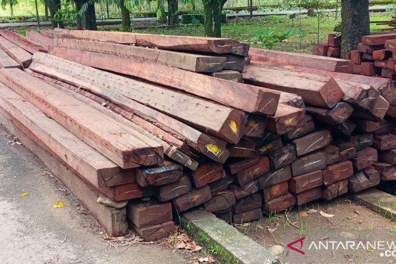 Gakkum KLHK tetapkan dua tersangka kasus kayu ilegal