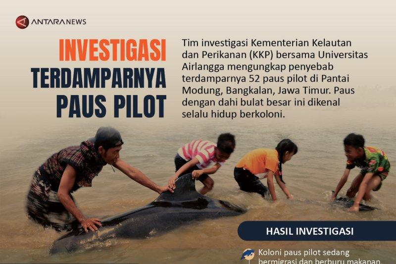 Investigasi terdamparnya paus pilot