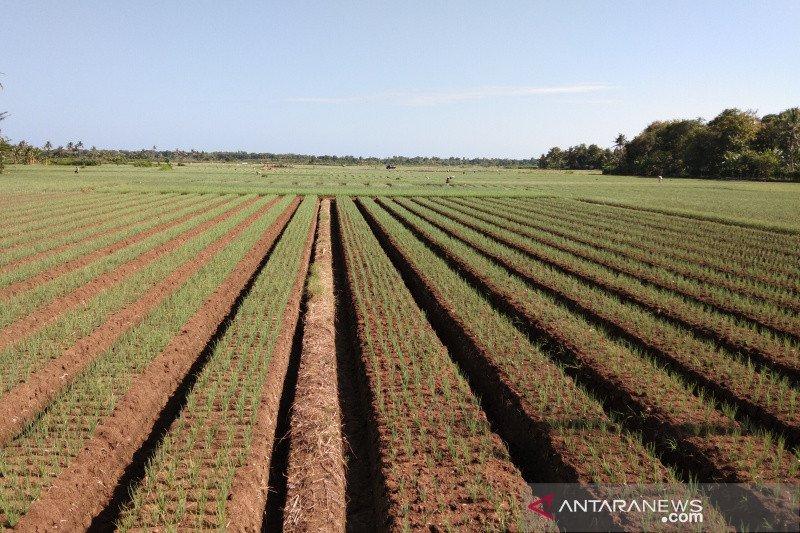 Bantul gandeng BMKG bina kelompok tani pahami iklim untuk pertanian