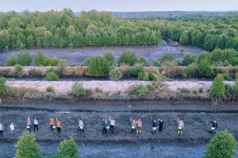 BRGM targetkan rehabilitasi mangrove 4.617 hektare di Kepri