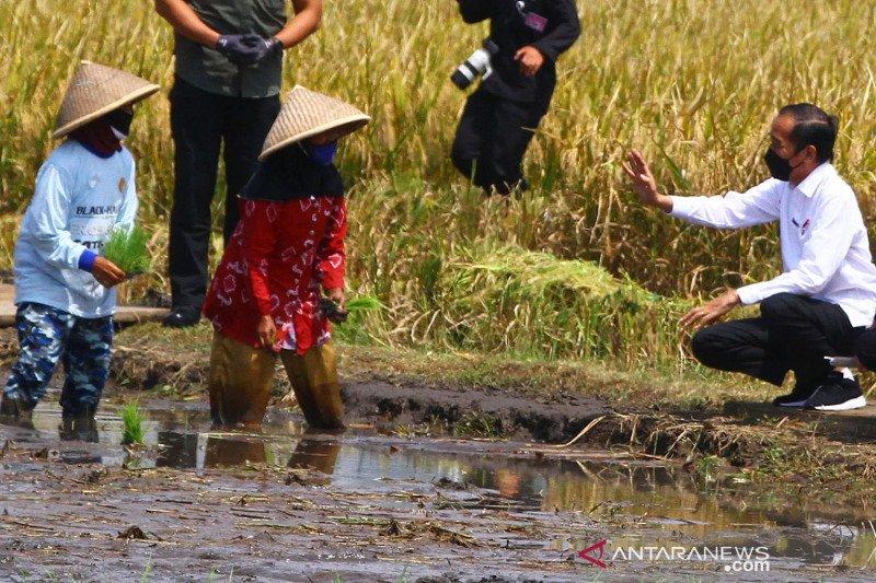 Presiden Jokowi panen raya padi dan beri bantuan pada korban gempa Malang