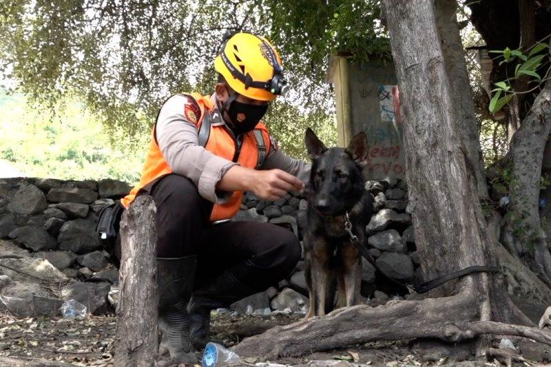 Mengenal Balo, anjing pelacak pencari korban bencana di Lembata
