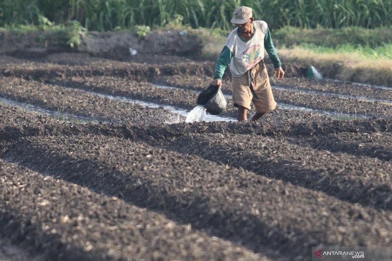 Kementan sebut penurunan NTP April momentum jaga harga tingkat petani