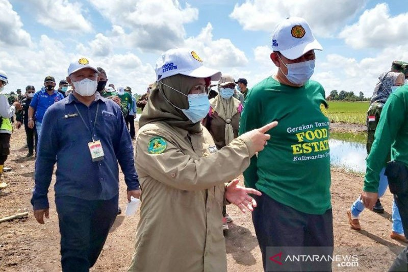 Kementan jadikan lumbung pangan Kalteng contoh bagi provinsi lain