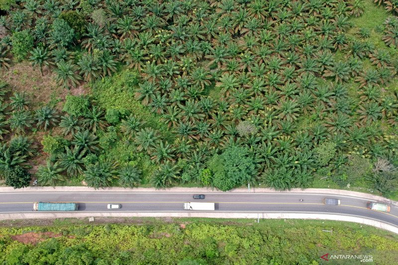 Jalan Lintas Sumatera Jambi-Riau sepi