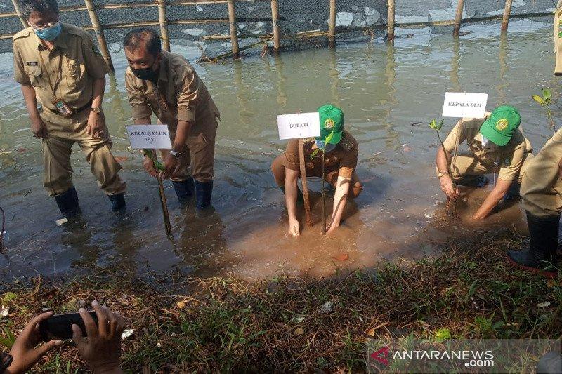 Bantul tanam seribu bibit mangrove sambut Hari Keanekaragaman Hayati