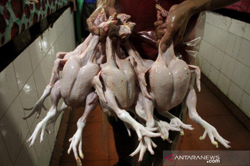Harga ayam potong di Makassar naik jelang Idul Fitri 1442 H