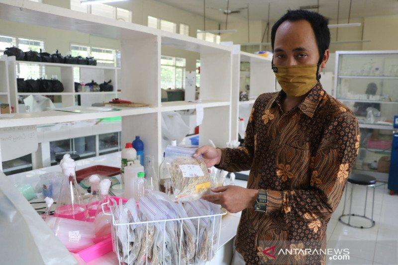 Peneliti Unej kembangkan varietas padi baru berbasis plasma nutfah
